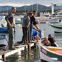 Pose de pieux en bois pour les pontons dans la lagune du Brusc