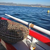 Girelier sur pointu méditerranéen
